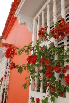 Bougainvillea historic Cartagena