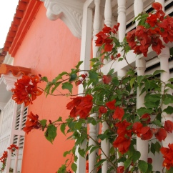 Bougainvillea historic Cartagena