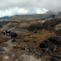 The high alpine landscape of Los Nevados National Park, near Manizales.