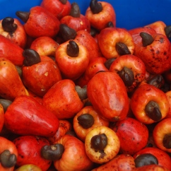 Cashews in the market in Iquitos, Peru.
