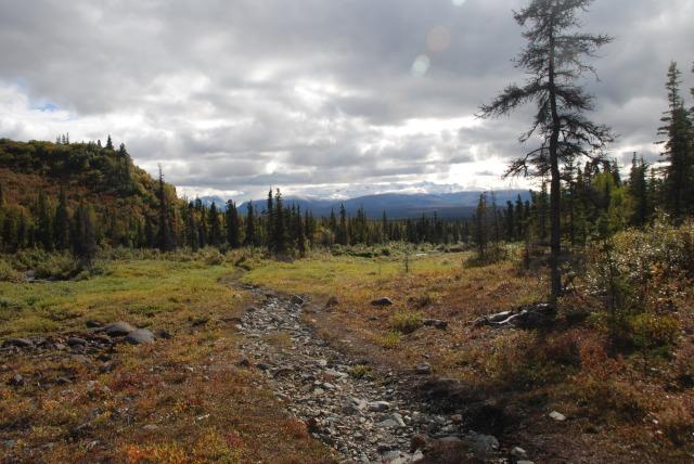 Caribou Creek Trail, Wrangell-St. Elias National Park.