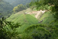 "Coffee fields in Minca, Colombia, from ""Drink Colombian Coffee"""