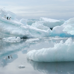"Adélie penguins and iceberg, Brown Bluff, Antarctica, from ""Make Sure You Have a Map"""