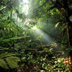 Gunung-Leuser National Park, Sumatra