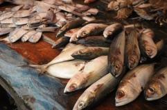 Fish in market, Lake Toba, Sumatra.